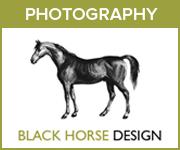 Black Horse Design Photography (Manchester Horse)