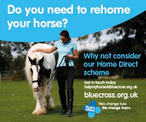 Blue Cross 2020 A (Manchester Horse)
