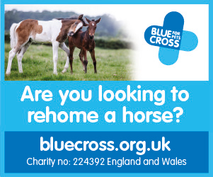 Blue Cross 2020 B (Manchester Horse)