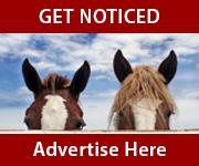 Get Noticed (Manchester Horse)